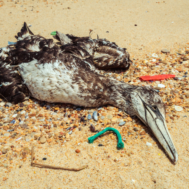 """Dead seagull on beach 5"" stock image"