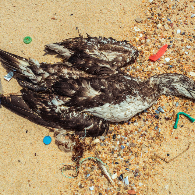 """Dead seagull on beach 6"" stock image"