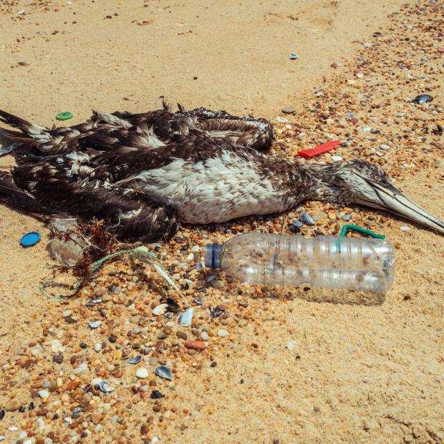 """Dead seagull on beach 2"" stock image"