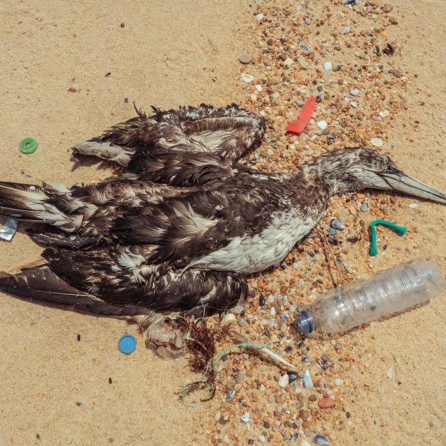 """Dead seagull on beach 1"" stock image"