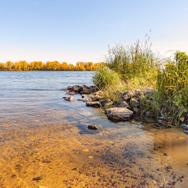 """View of willow trees and reeds close to the Dnieper River in Kie"" stock image"