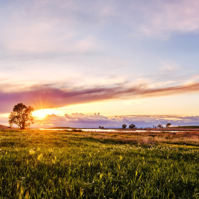 """Amazing Sunset Over an Huge Green Field"" stock image"