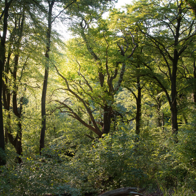 """""""Secret Forest. A corner of England that is forever my own."""" stock image"""