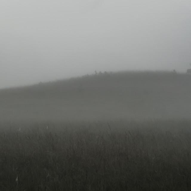 """Mist-ical Deer"" stock image"