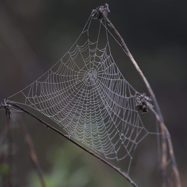 """Spider webb"" stock image"
