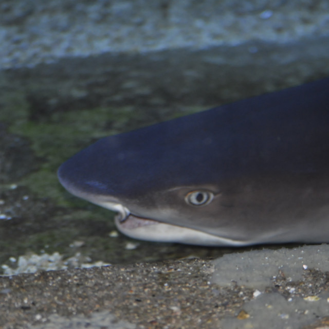 """Shark!"" stock image"
