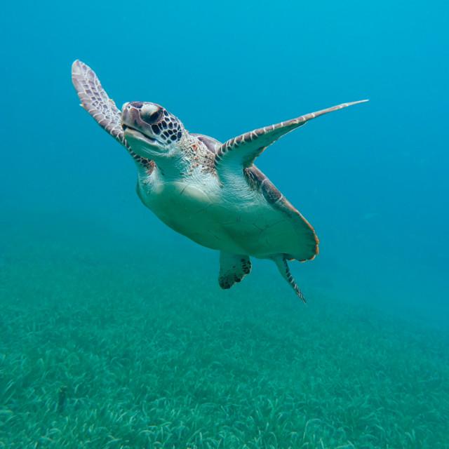 """""""Flying Turtle"""" stock image"""