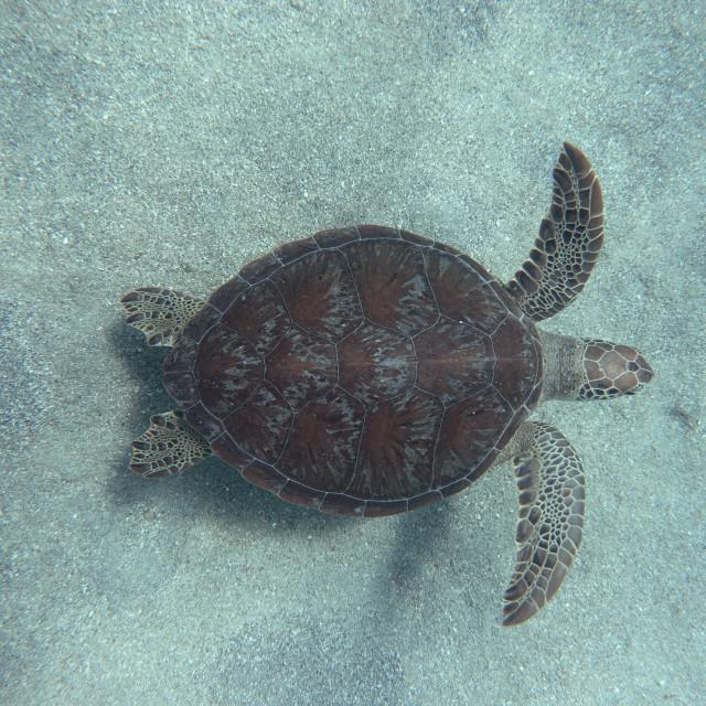 """Sandy Turtle"" stock image"