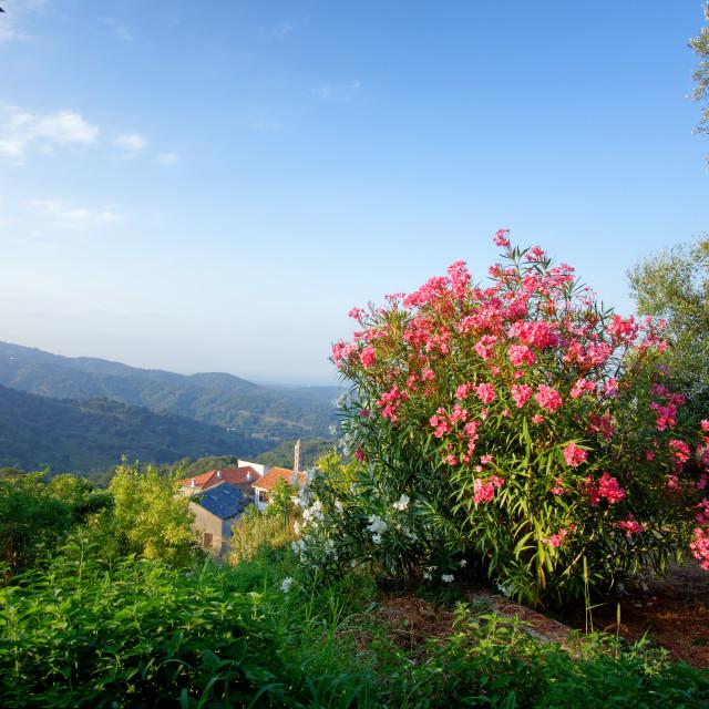 """Costa verde panorama"" stock image"