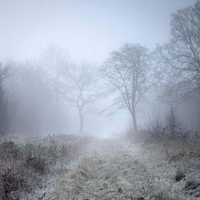"""""""Misty Frosty Morning in the Woods"""" stock image"""