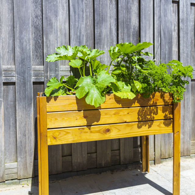 """""""Wooden design potager kitchen table with vegetables and herbs in a garden"""" stock image"""