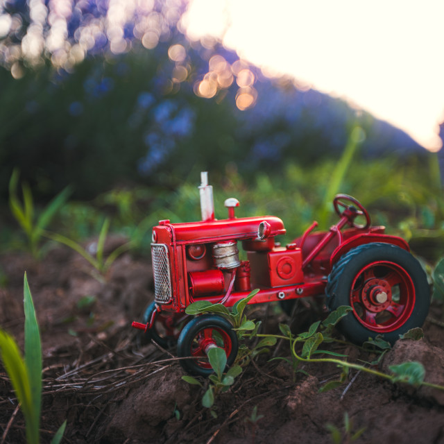 """Miniature red tractor in a lavender flower in the field."" stock image"