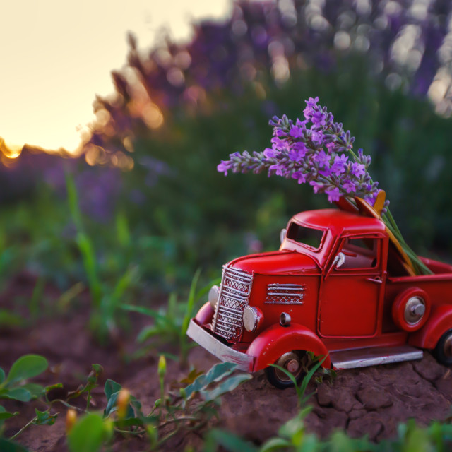 """Miniature red truck in a lavender flower in the field."" stock image"