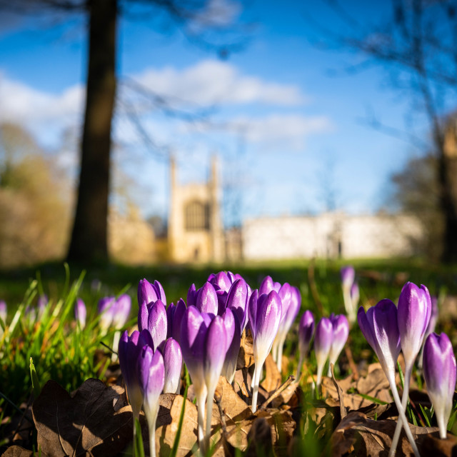 """Spring flowers, King's backs, Cambridge UK."" stock image"