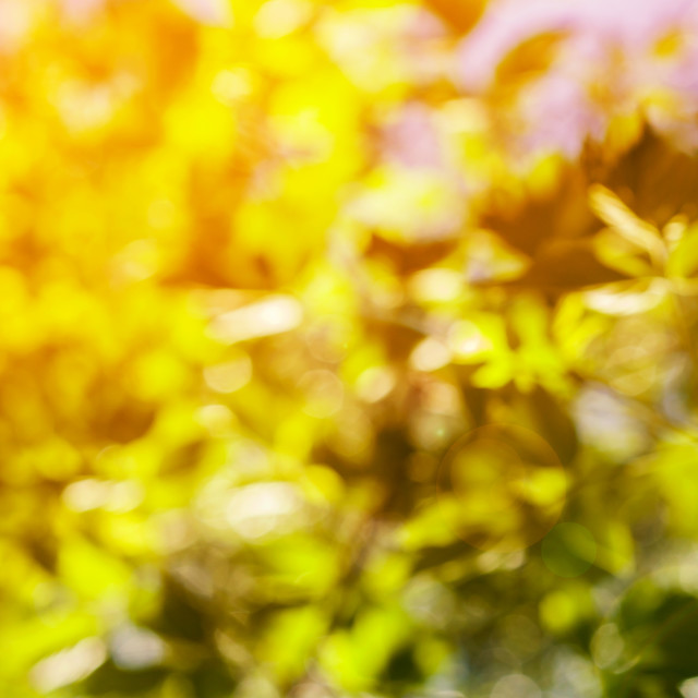 """""""natural green leaves blurred background"""" stock image"""