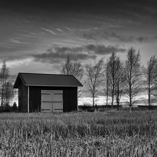"""""""Old Hut And Birch Trees In The Sunset"""" stock image"""