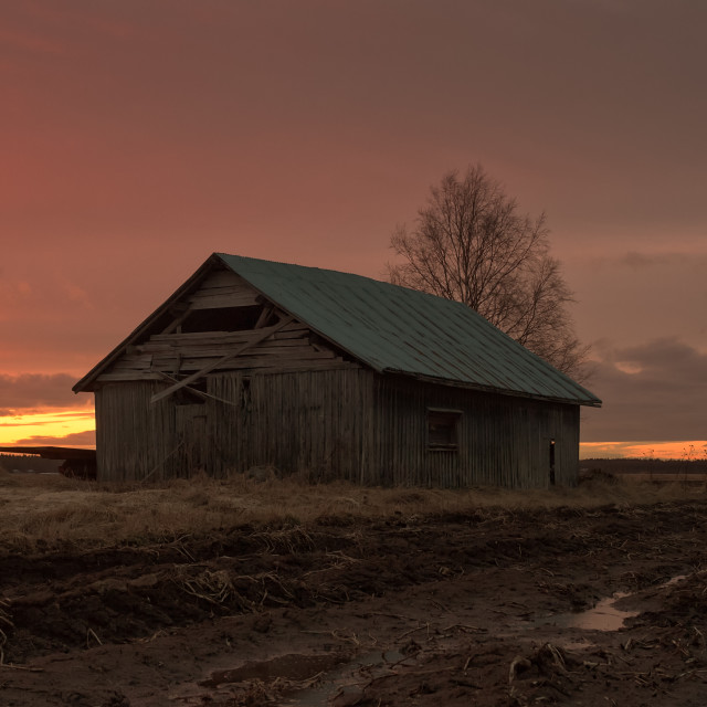 """""""Barn House In The Springtime Sunset"""" stock image"""