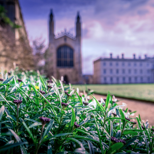 """""""Sunset, King's College Chapel and the Gibbs Building defocused"""" stock image"""