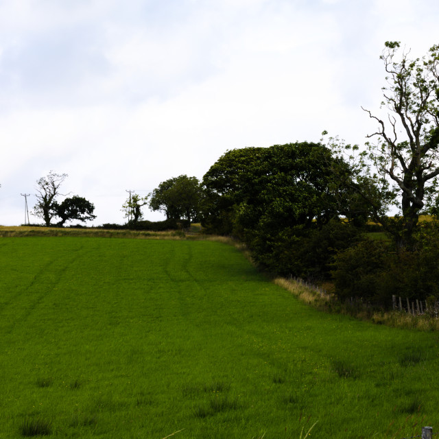 """""""Portrait view of a tree lined field"""" stock image"""