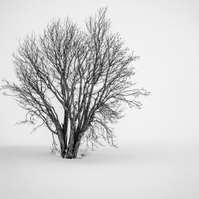 """Lone Tree in Abandoned Graveyard B&W"" stock image"