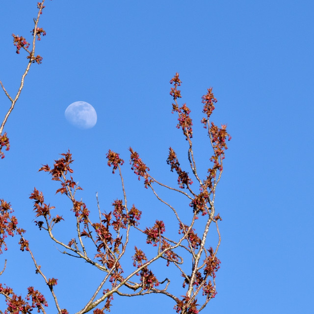 """""""TheMoon in April"""" stock image"""