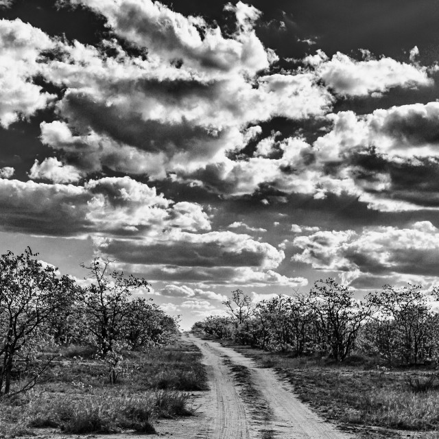 """""""Cloudy day in the bush BNW"""" stock image"""