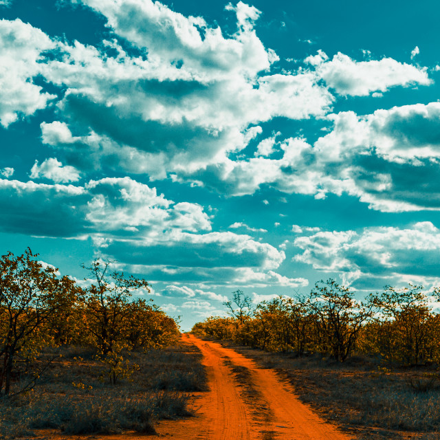 """""""Cloudy day in the bush"""" stock image"""