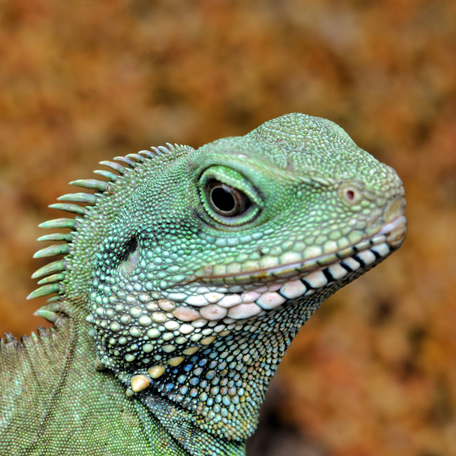 """""""Little Godzilla"""" stock image"""
