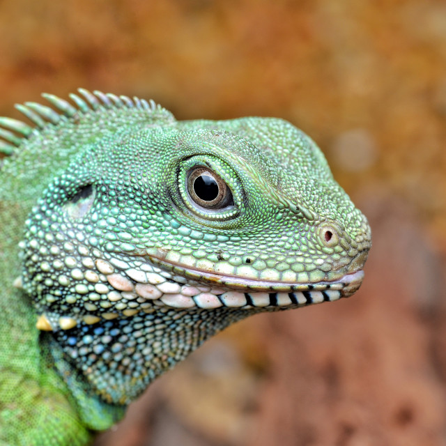 """""""Green Little Godzilla"""" stock image"""