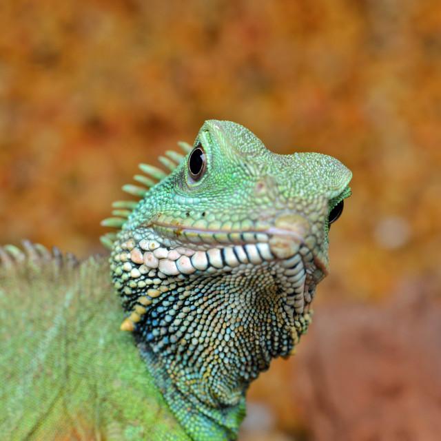 """Cute Little Dragon"" stock image"