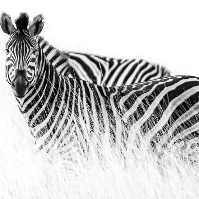 """""""Black and white"""" stock image"""