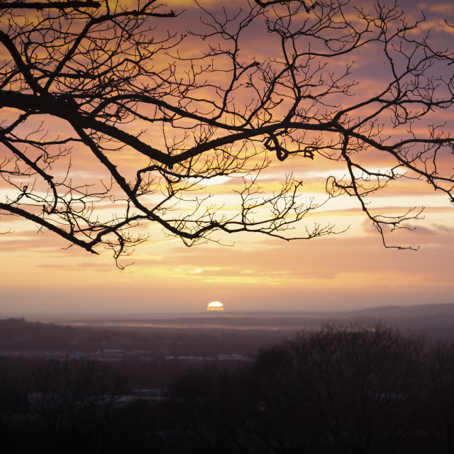 """""""Winter trees and a sunset"""" stock image"""
