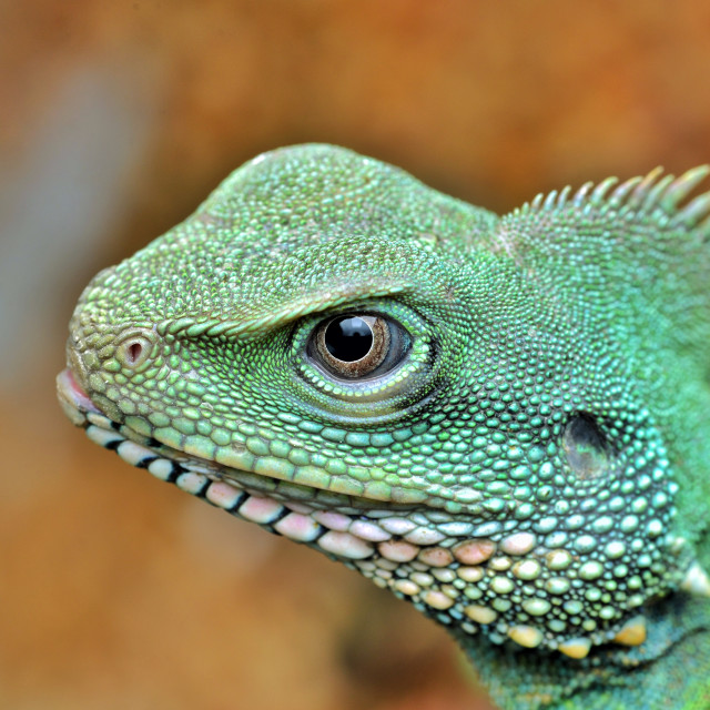 """""""Portrait of Water Dragon"""" stock image"""