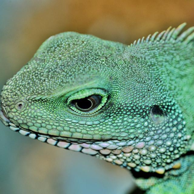 """The Green Lizard"" stock image"