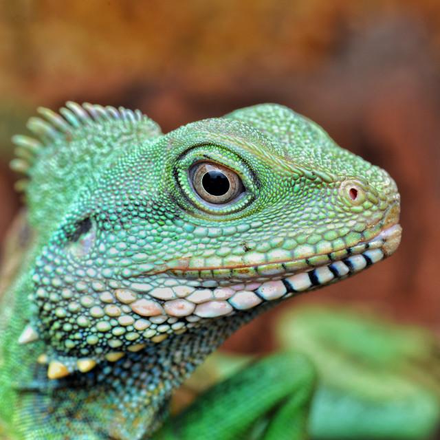 """Chinese Water Dragon"" stock image"