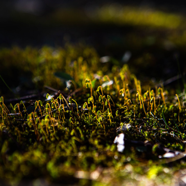 """Moss in Sunshine"" stock image"