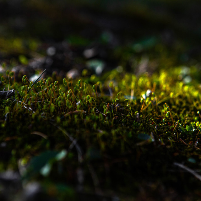 """Patch of sunlight on moss in spring"" stock image"