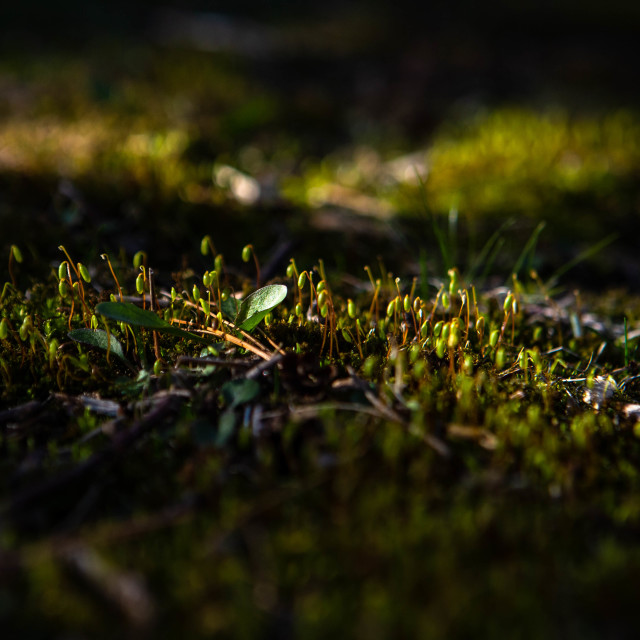 """Moss growing in spring sun"" stock image"