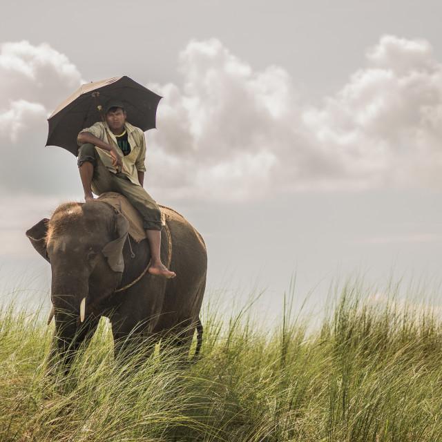 """Man riding an elephant"" stock image"