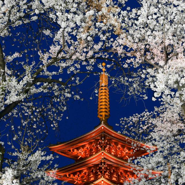 """Cherry Blossoms Asakusa 02"" stock image"