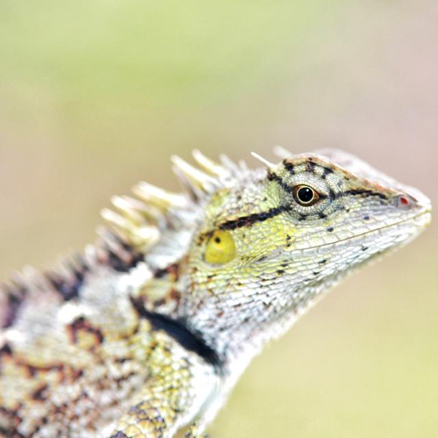 """Portrait of Lizard"" stock image"
