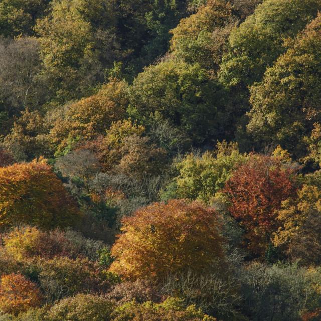 """""""Autumn Trees on Dartmoor"""" stock image"""
