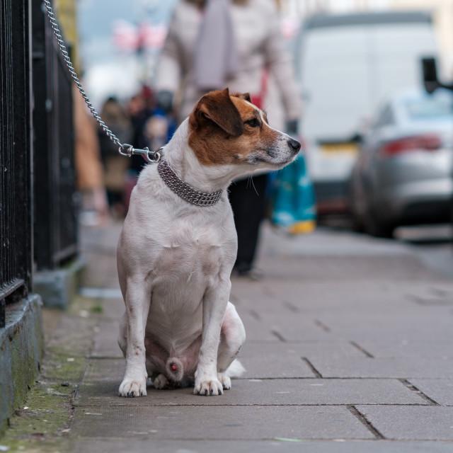 """Dogs who wait"" stock image"