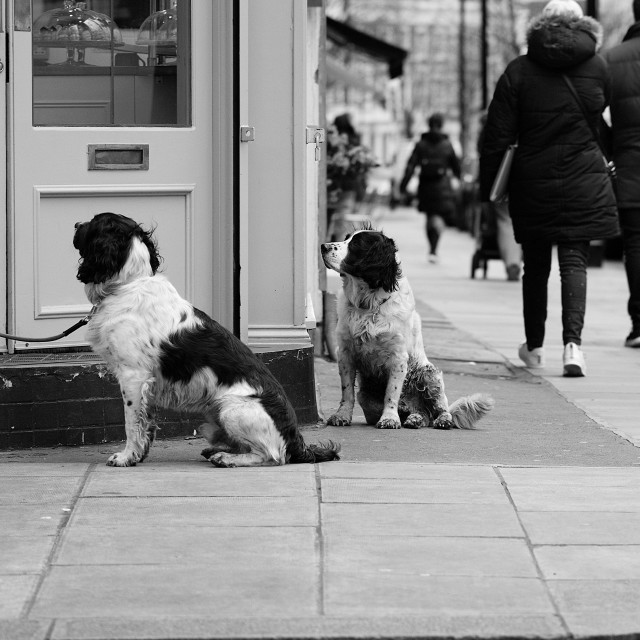 """Dogs who wait"" stock image"
