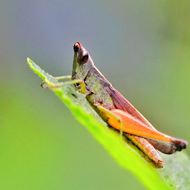 """""""Cute Young Grasshopper"""" stock image"""