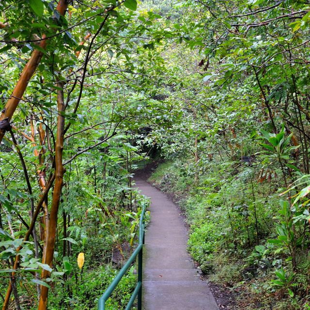 """Path to the jungle"" stock image"