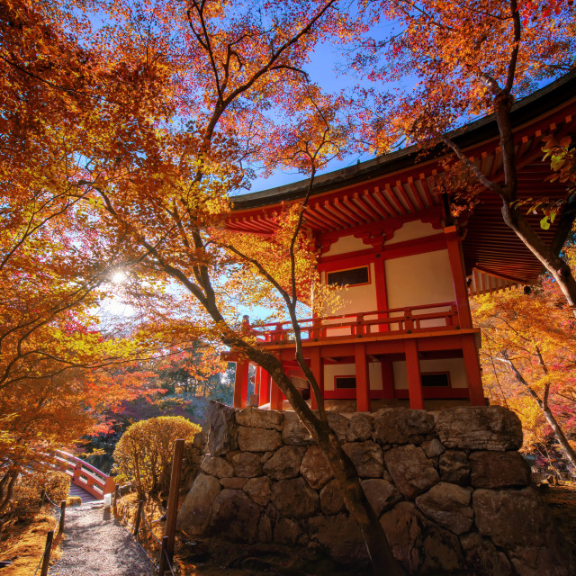 """Daigoji pagoda with autumn leaf, Kyoto"" stock image"