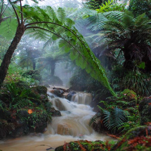 """Flowing river, Terra Nostra Garden Park"" stock image"