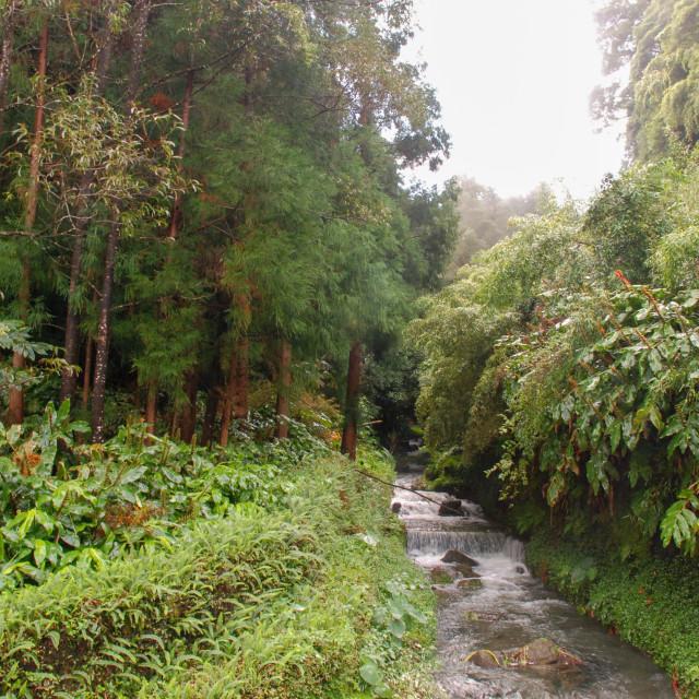 """Terra Nostra Botanical Park river"" stock image"