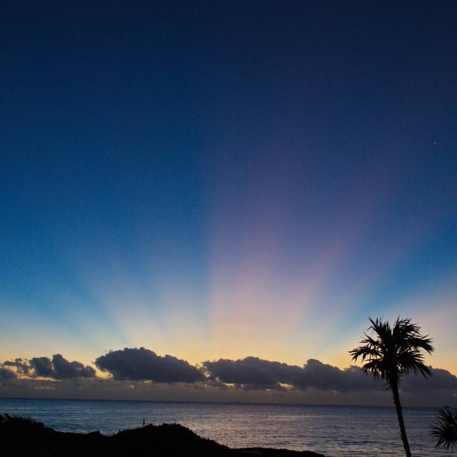 """Tropical Sunrise Vertical"" stock image"
